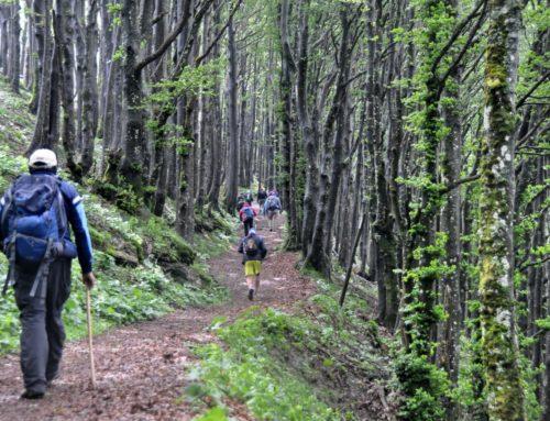 Operatori e ospiti del centro diurno Kaos nelle foreste Casentinesi